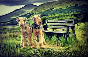 Airedale 3