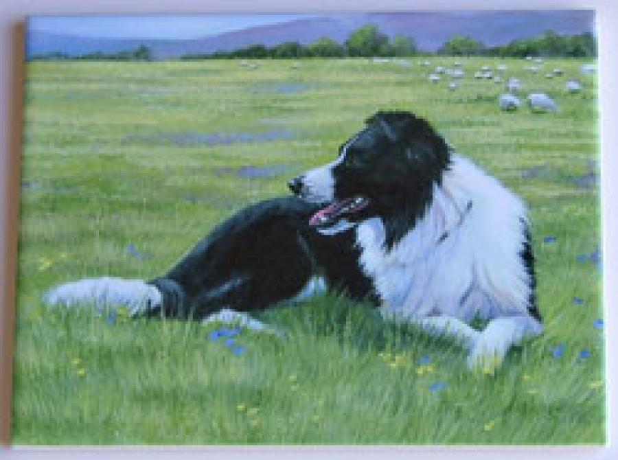 Border Collie #2 6X8 Ceramic Picture Tile