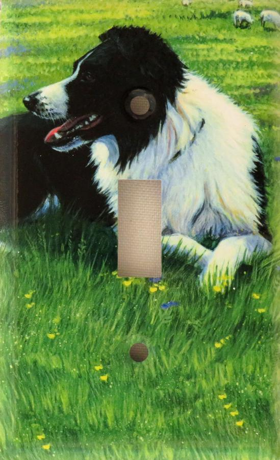 Border Collie Picture Single Light Switch Plate #2A