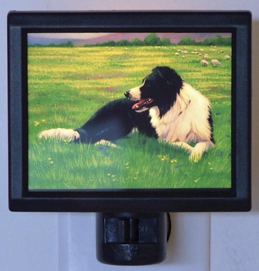 Border Collie Picture Nightlight #2