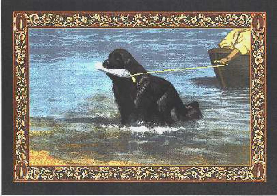 Newfoundland Tapestry Placemat #1 single