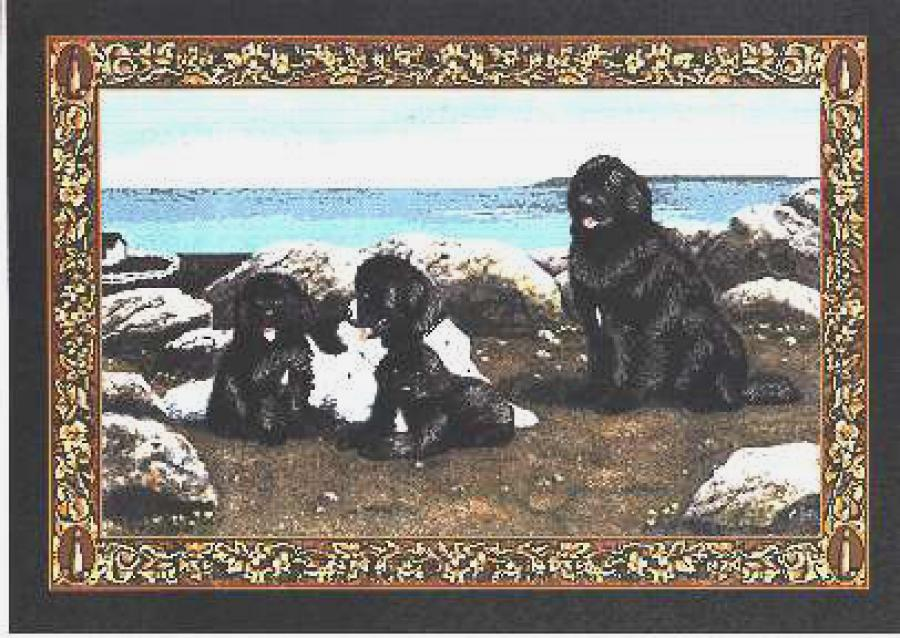 Newfoundland Tapestry Placemat #4 Single