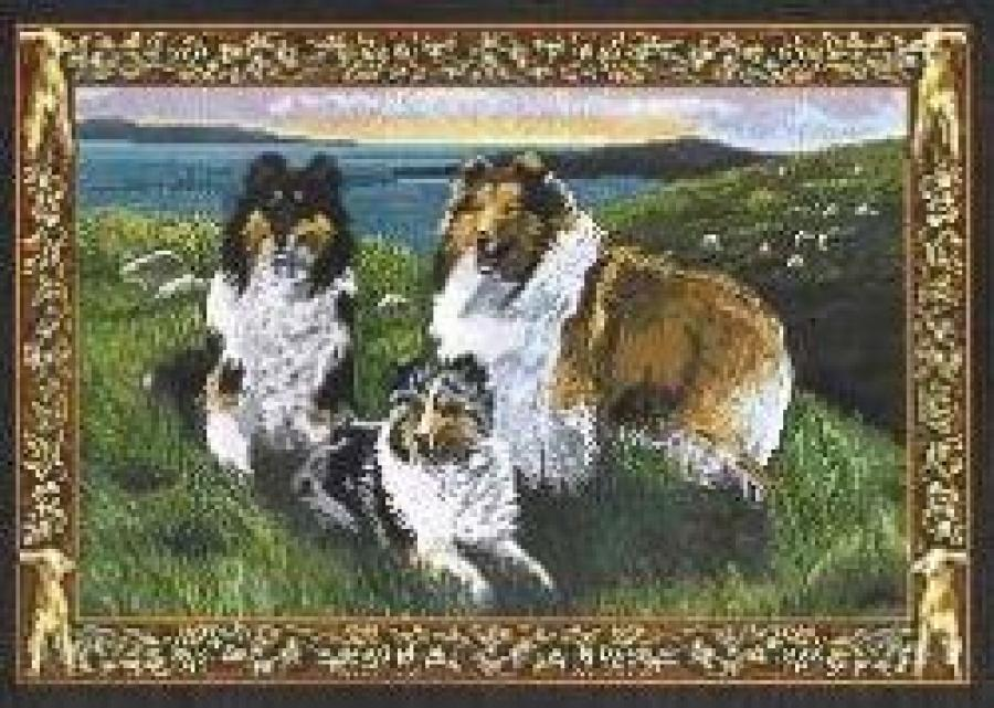 Sheltie Set of Four Tapestry Placemats