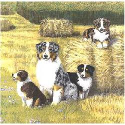 Australian Shepherd Picture Pillow