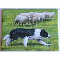 Border Collie #1 6X8 Ceramic Picture Tile