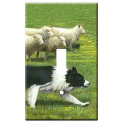border collie 1a slsp