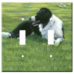 Border collie 2a-dlsp