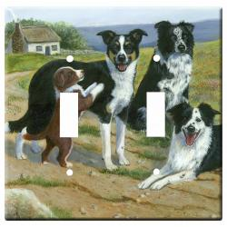 Border collie 3a-dlsp