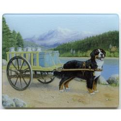 Bernese Mt Dog 1 Tempered Glass Cutting Board
