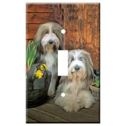 Bearded collie 11a-slsp