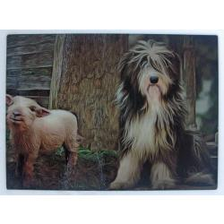 Bearded collie 6-cb