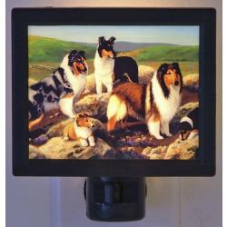 Collie Picture Nightlight #3
