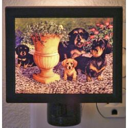 Dachshund Picture Nightlight #3