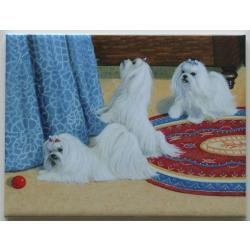 Maltese 3 - 6X8 Ceramic Picture Tile