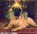 English Mastiff Pictue Double Light Switch Plate #1A