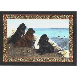 Newfoundland Tapestry Placemat #2 single
