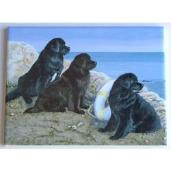 Newfoundland #3 - 6X8 Ceramic Picture Tile