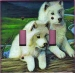 Samoyed Picture Double Light Switch Plate #2B