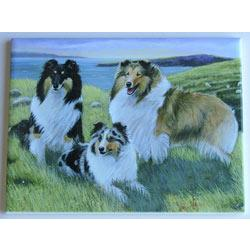 Sheltie #1 - 6x8 Ceramic Picture Tile