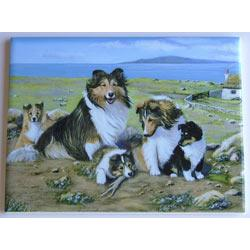 Sheltie #3 - 6x8 Ceramic Picture Tile