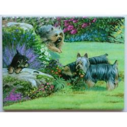 Silky Terrier Picture Tile 6X8 #2