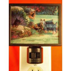 Silky Terrier Picture Nightlight #2