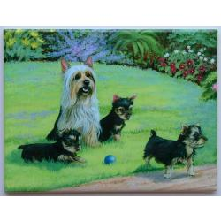Silky Terrier Picture Tile 6X8 #3