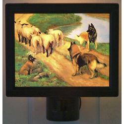 Belgian Tervuren Picture Nightlight #4
