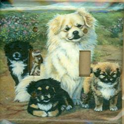 Tibetan Spaniel Picture Double Light Switch Plate #2B